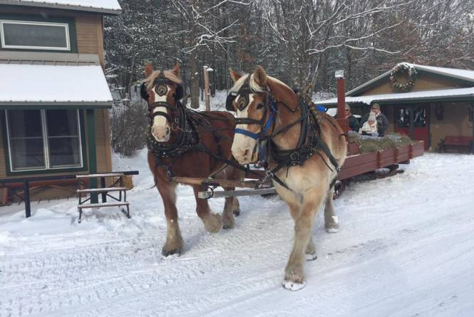 Come book a hay or sleigh ride with us this coming Fall/Winter!