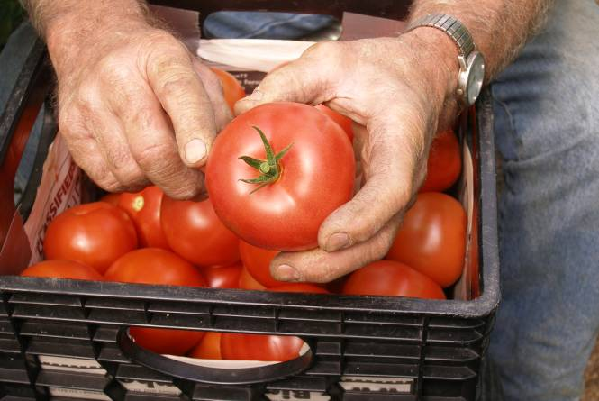 Dining - Wild Tomato