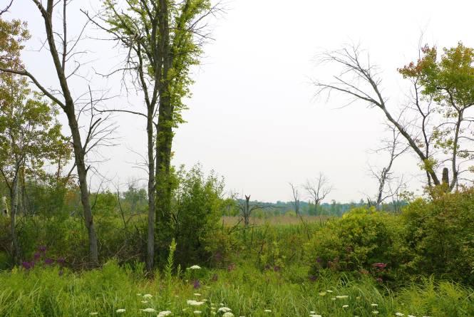 Trapp Farm Nature Preserve