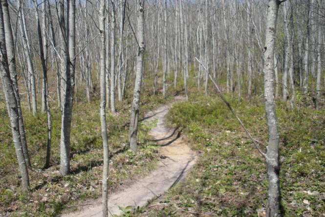 Vasa Pathway