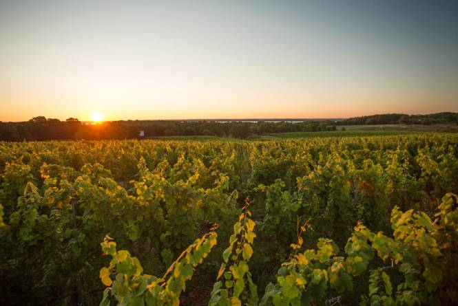Wineries of Old Mission Peninsula