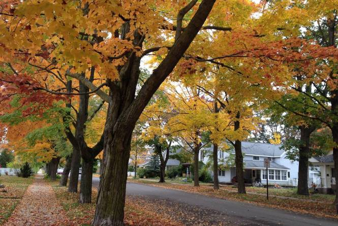 Tree-Lined Streets of Traverse City