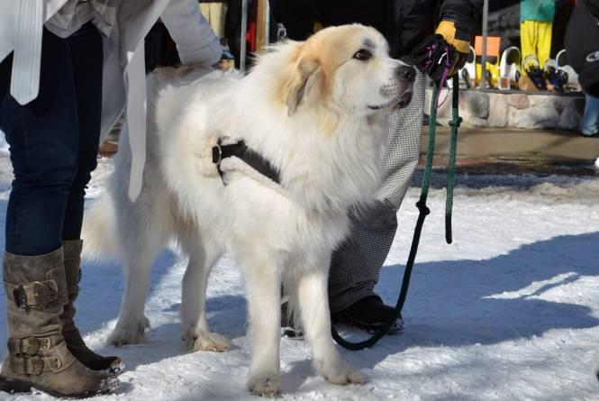 Deerfield Dog Lodging