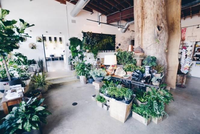 Darling Botanical Company