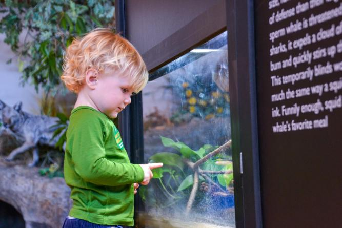 Toddler looking into an aquarium