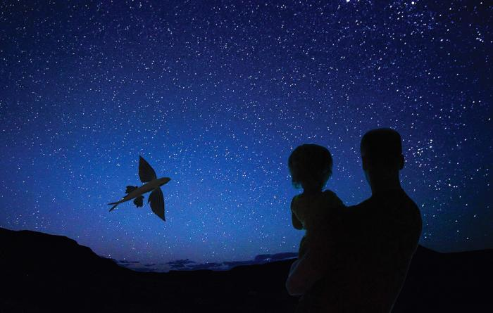 Father and child watch a flying fish against a starry ski near Catalina Island