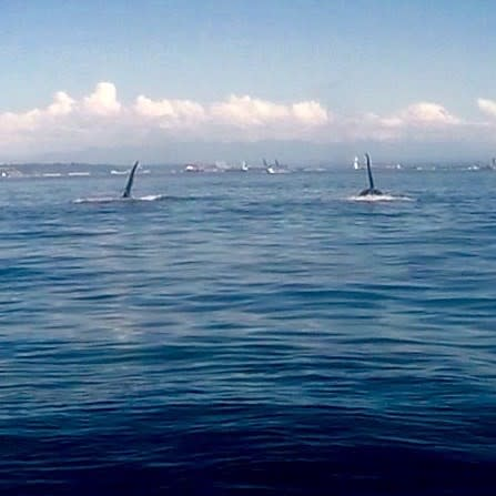 Orcas on a Monday morning