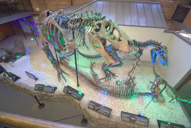 Dinosaur Bones at Museum of World Treasures