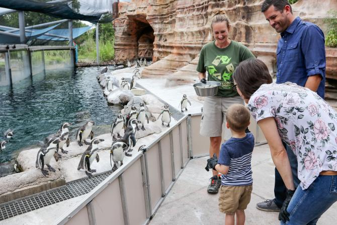 A family feeds penguins at the Sedgwick County Zoo