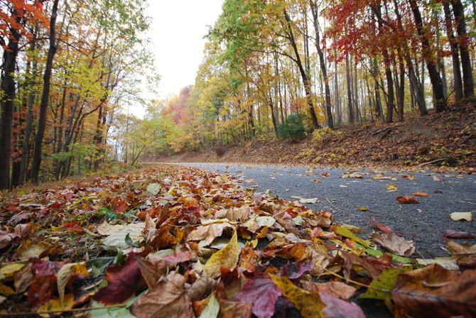 Fall Leaves - Road in Franklin County