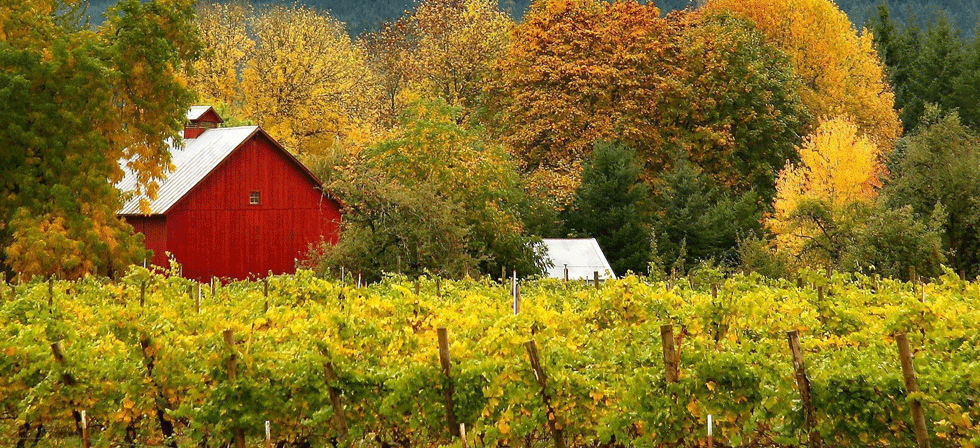 Saginaw Vineyard