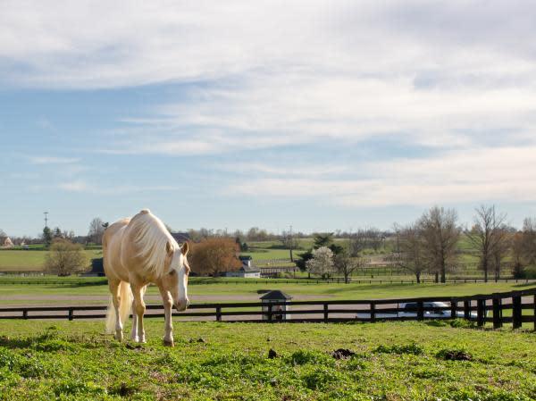 Hank at The Kentucky Horse Park