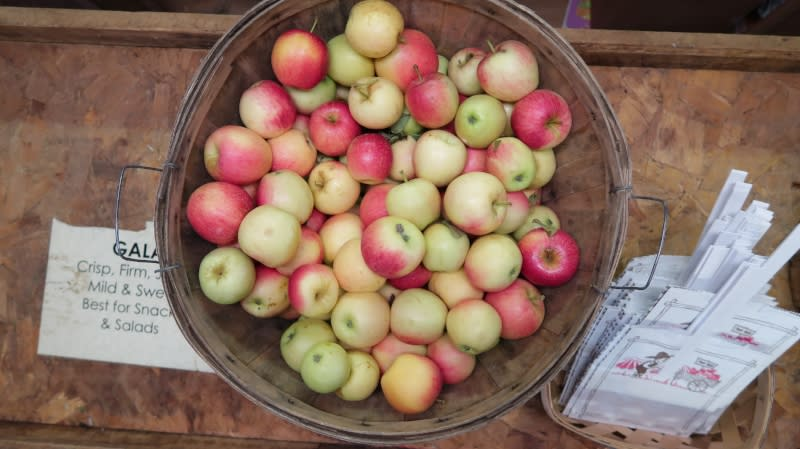 musgrave orchards