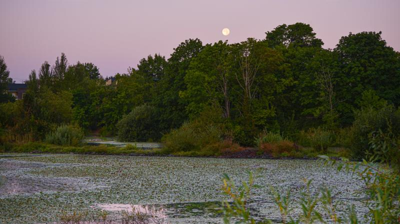 Delta Ponds moonrise by Melanie Griffin
