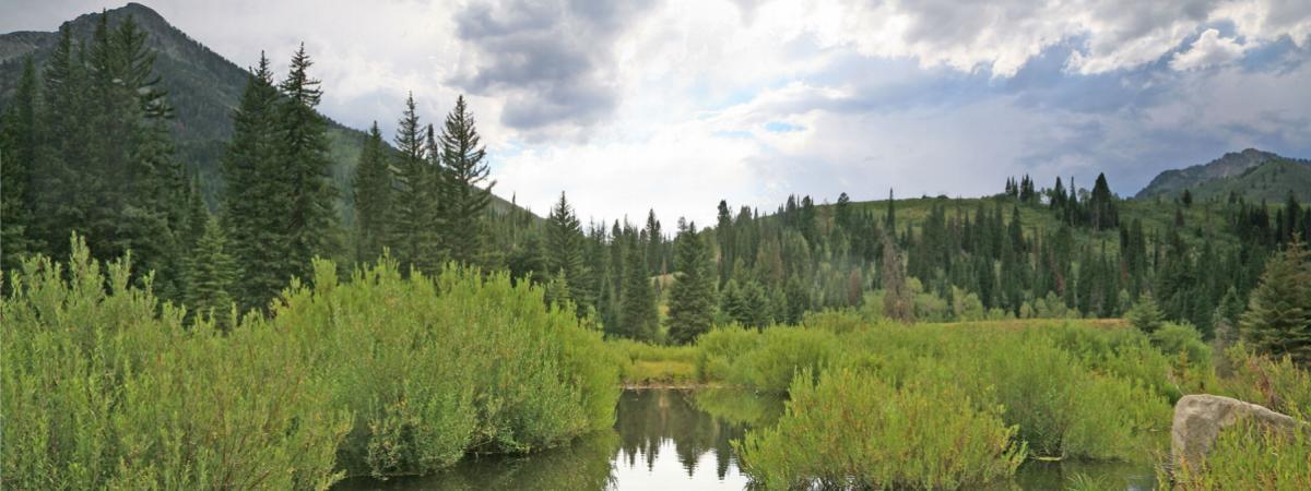 Pond on Big Cottonwood Creek