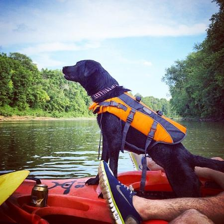 dog with life jacket in a kayak on the licking river in  northern kentucky