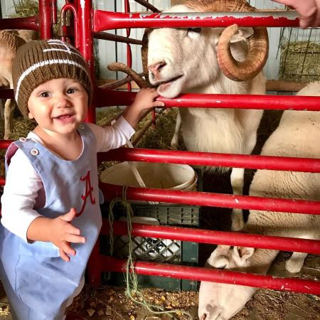 photo of a smiling child holding onto a red gate during a trip to a petting zoo with sheep