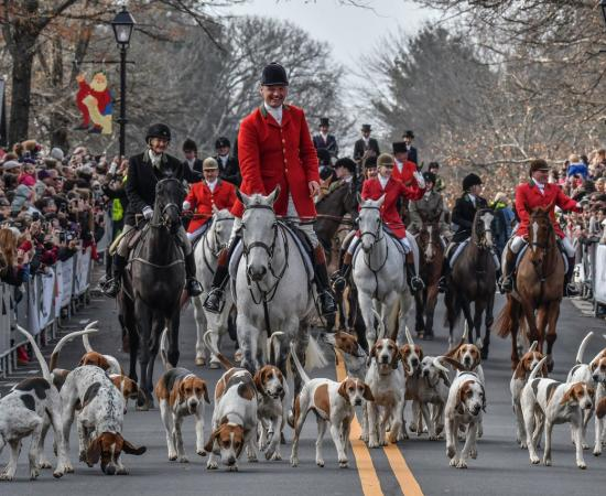 The Middleburg Hunt's hounds and horses lead the way down the town's streets for the Christmas in Middleburg celebration