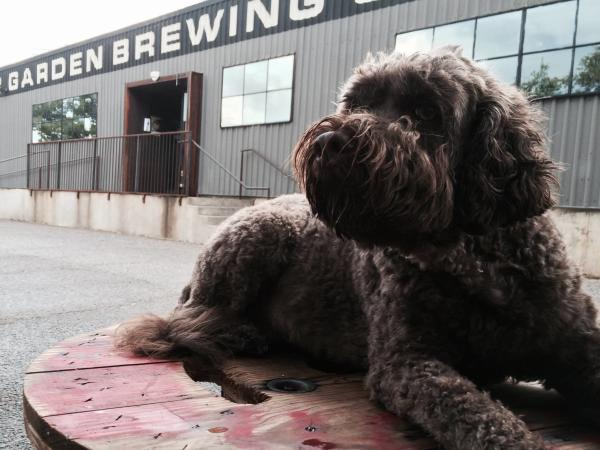 Dog on the patio at the Austin Beer Garden Brewing Company