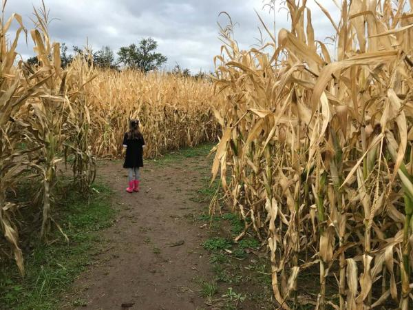 Corn Maze at Northern Lights Christmas Tree Farm by Taj Morgan
