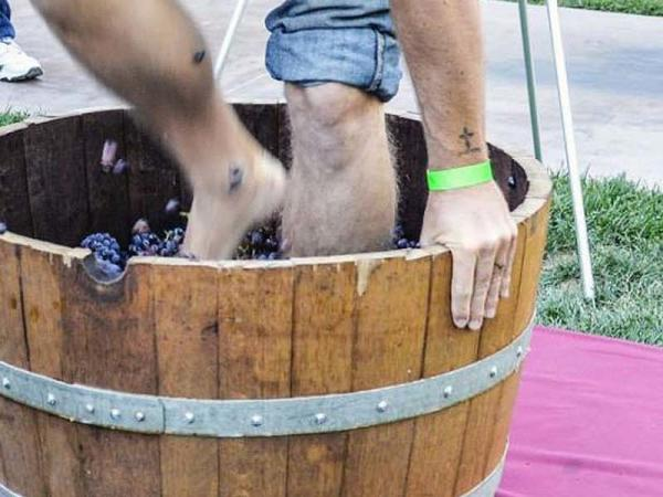Grape Stomp 2019