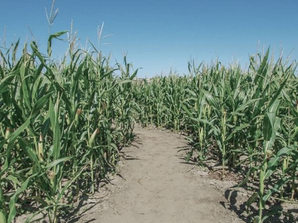 Big Horse Corn Maze & Pumpkin Patch
