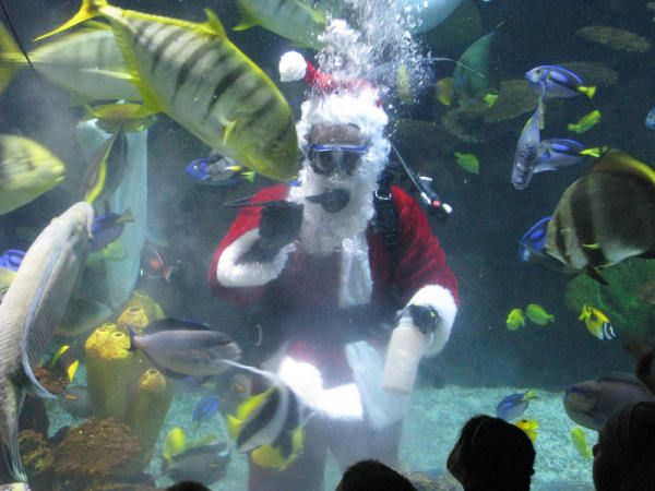 Scuba Santa - Wildlights