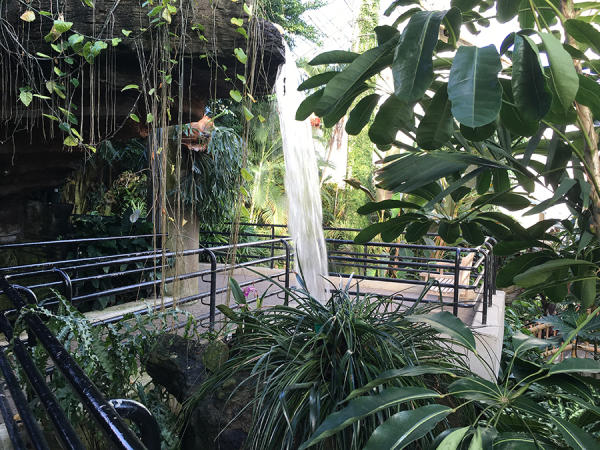 Waterfall at the Botanical Conservatory in Fort Wayne, Indiana