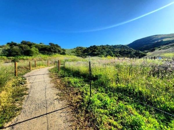Boomer Meadow