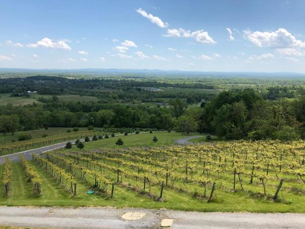 Bluemont Vineyard