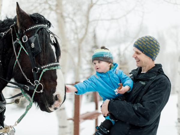 Little boy petting horse before sleigh ride at Deer Valley Resort