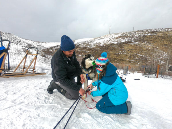 Dogsled musher shows young girl how to work with the dogs
