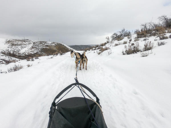 view of dogs from sitting in the dog sled
