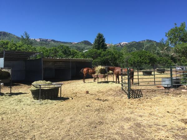 Horses by a barn at a ranch