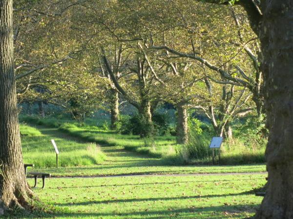 Wide open meadow