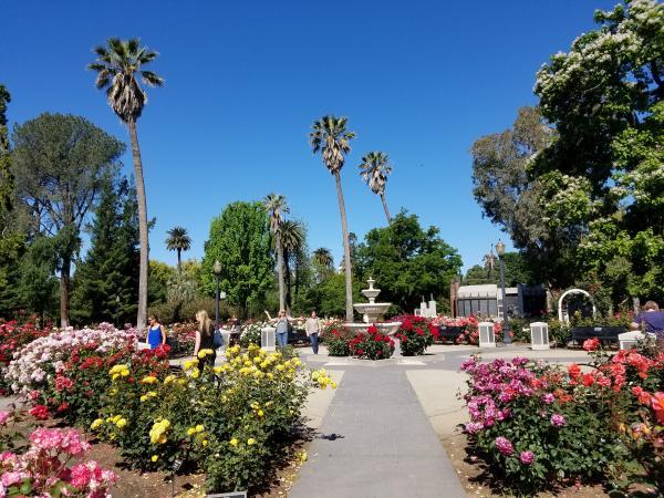 Capitol World Peace Rose Garden