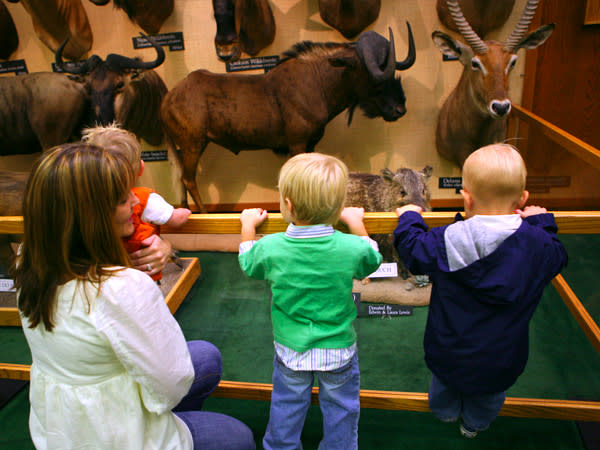 Where to Take Your Toddler in Utah Valley - Animal Museum