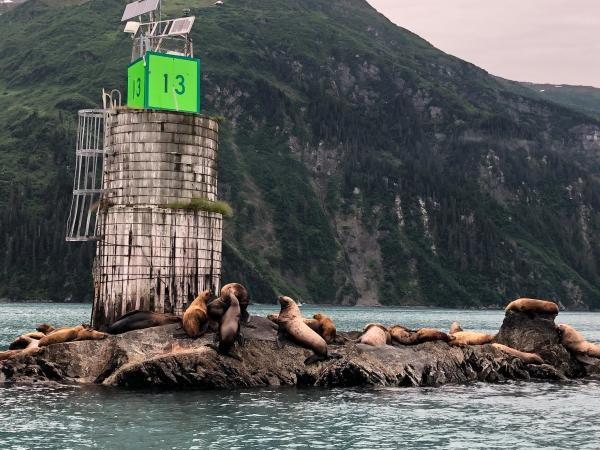 sea lions on a small island in Port Valdez
