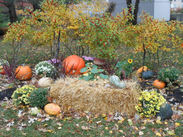 Botanical Conservatory Punkin' Path Display - Fort Wayne, IN