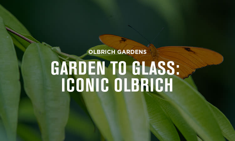 Iconic Olbrich_750x450 Experience
