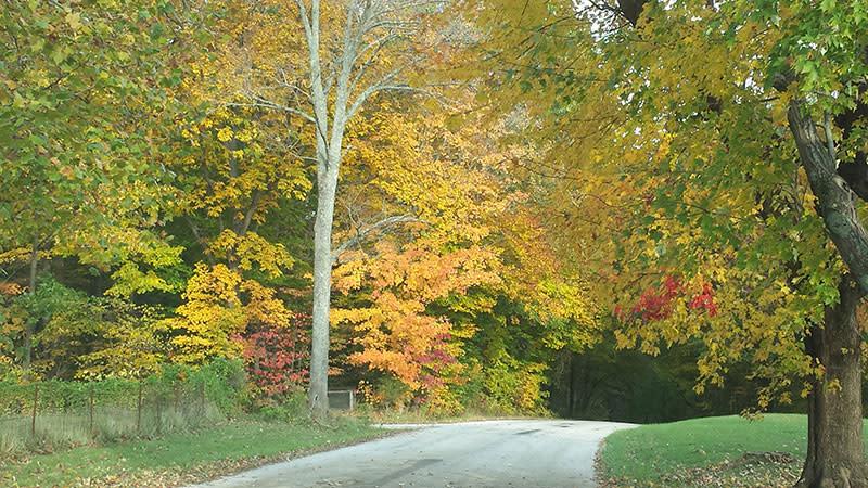 Backroads in Fall