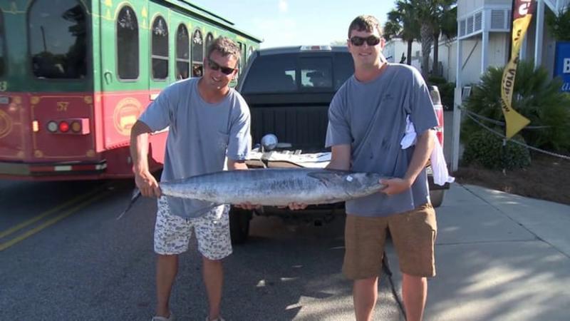 Video Thumbnail - vimeo - Blue Marlin
