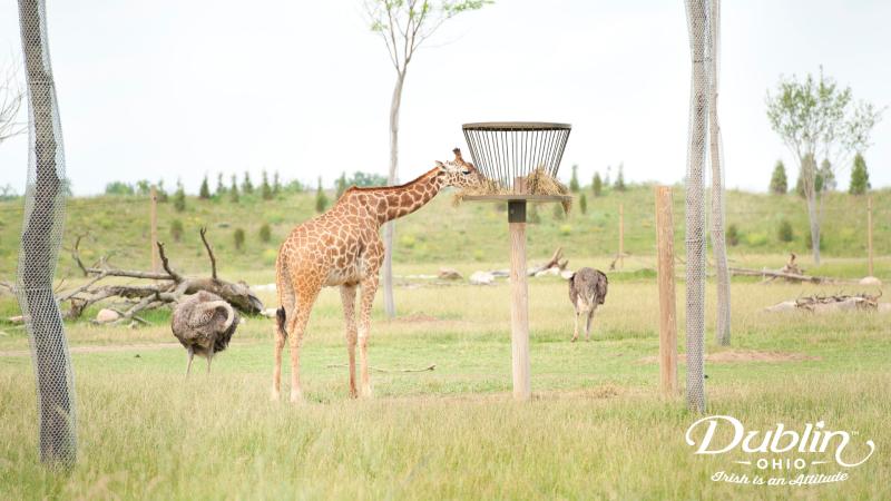 Zoo Zoom Background