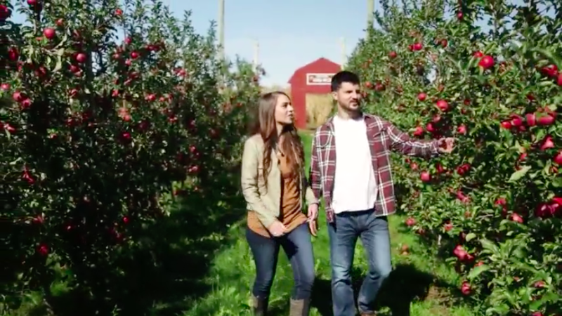 A couple walking through Ferguson's Apple Orchard in the fall.