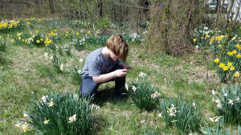Photographers of all skill levels enjoy a visit the daffodil gardens.