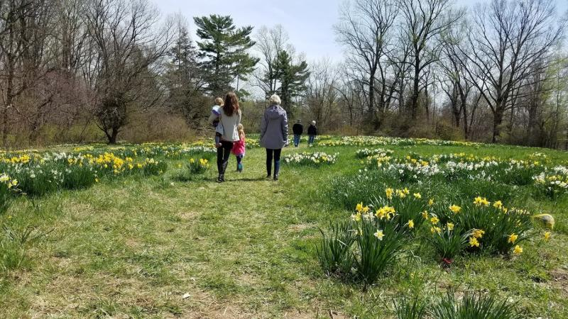 Visitors are asked to stay on the mowed pathways once inside the daffodil garden area.