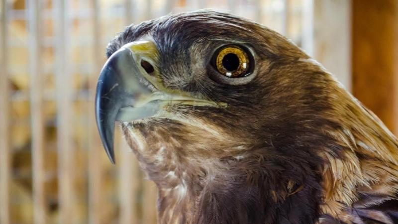 See live raptor demonstrations from the Indiana Raptor Center at the Old Town Waverly Park Festival.