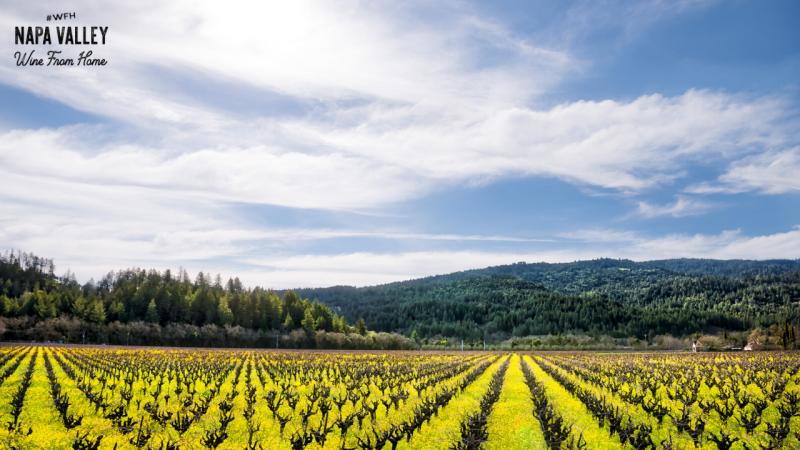 Mustard Vineyards Zoom Background