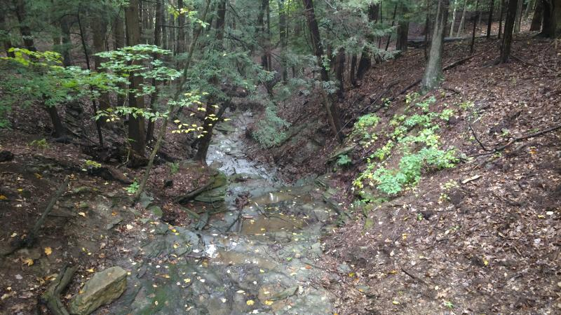 A photo of Rob's trail creek taken from above, staring down in the direction of the stream flow.