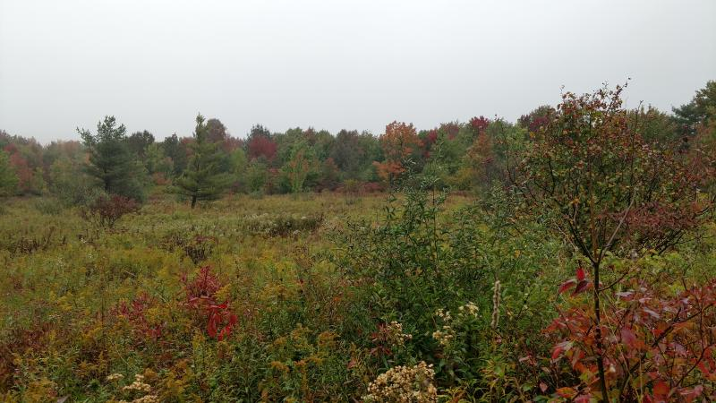 The top of Rob's Trail opens into expansive shrub land with a variety of small, leafy bushes surrounding the trail.